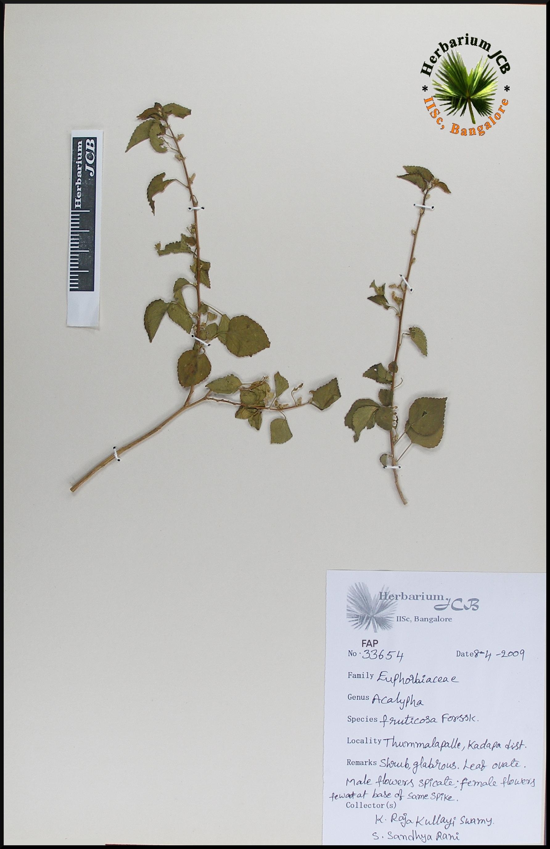 Herbarium Jcb